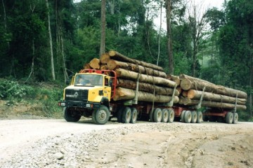 Tropical timber - Oilfield outside UE