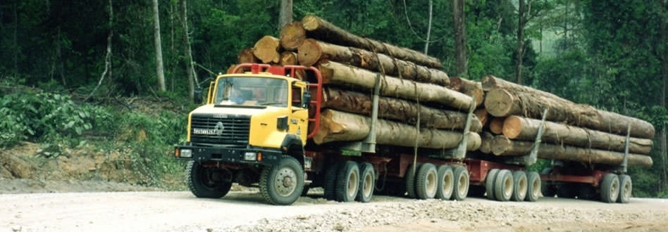 Tropical timber - Oilfield
